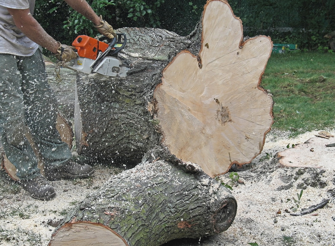 Tree Removal Concord